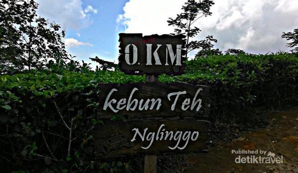 Yogyakarta Punya Pesona Kebun Teh Nglingo Kulonprogo Dusun Nglinggo Pagerharjo
