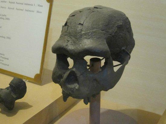 Replica Java Man Homo Erectus Solo City Picture Sonobudoyo Museum